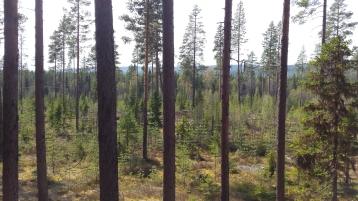 Västernorrland Sweden